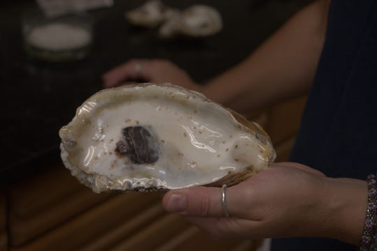 A recycled oyster shell bearing coffee grain-like spat, the name used for oyster larvae once they have glued themselves onto a substrate, is held by Horn Point Oyster Hatchery manager Stephanie Tobash Alexander Aug. 2, 2019 at the facility in Cambridge.