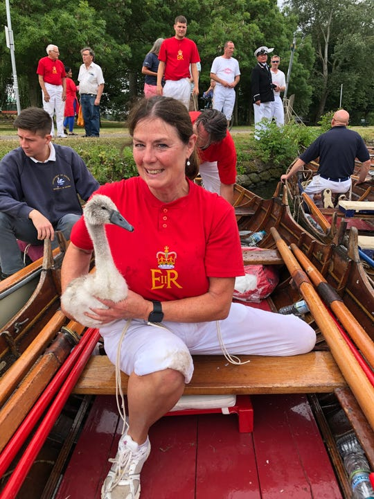 """Karen Hammond, who grew up in Chamberlain, holds a cygnet during the annual """"swan upping"""" on the Thames River in July."""