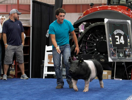 Logan Schmitz, of Mineral Point, walks his grand champion barrow on the stage for the Governor's Blue Ribbon Livestock Auction on Aug. 7 at the Wisconsin State Fair. The barrow sold for $14,000.
