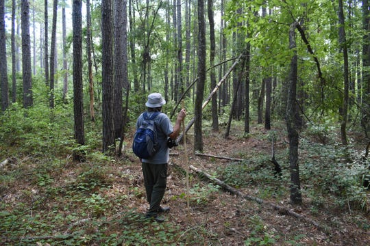"Claude looks at a '""tree teepee"" which he said is one of the markers or barriers which could be made by Bigfoot. He said researching Bigfoot involves looking for signs such as these which are too conform to occur naturally."