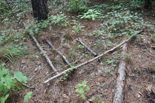 "Claude, a Bigfoot researcher from Baton Rouge, found three sticks parallel to each other and perpendicular to another branch.  He said is typical of a marker used by Bigfoot. ""It's the small things you really have to look for,"" said Claude. ""They are too conform to be natural for the most part."""