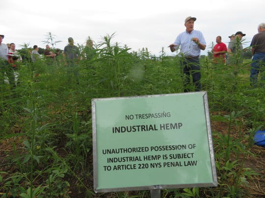 Chris Becker  with BAAR Scientific, Phelps, New York, explains the elements of growing hemp to those attending Empire State Farm Days in Seneca Falls in early August. Licensed industrial hemp growers must notify authorities of the location of their crop.