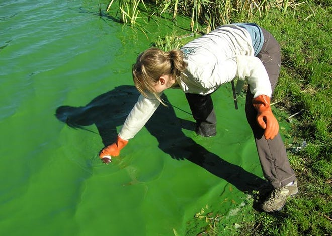 The Washington State Department of Ecology Freshwater Control Program samples a lake with a visible cyanobacteria bloom.