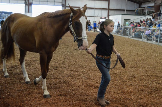 Grace Hensley, who won showman of market lamb for the junior class, works with a horse during the Showman of Showmen contest on Aug. 9, 2019.