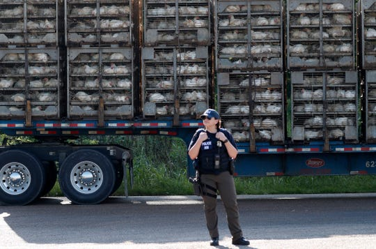 A trailer loaded with chickens passes a federal agent outside a Koch Foods Inc., plant in Morton, Miss. Wednesday, Aug. 7, 2019.