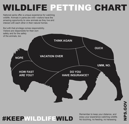 "Should you pet a wild bison? The answer, surprisingly, is ""no,"" according to the National Parks Service."