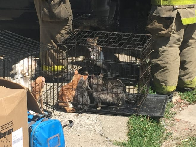 Animals sit in cages following a fire Friday afternoon at 141 Vennum Ave.