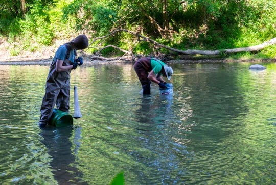 Alyssa Winters, left, and Dave Dortman, use glass-bottomed buckets to search the bottom of the Black River for mussels Friday, Aug. 9, 2019, in Grant Township.  Scientists came with Friends of the St. Clair River to search for the Northern Riffleshell, a mussel that's listed as an endangered species.
