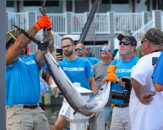 The crew of the Reel Current, out of Ocean City, MD caught a white marlin on the last day of the White Marlin Open on August 9, 2019. It failed to meet the minimum weight of 70 pounds however.