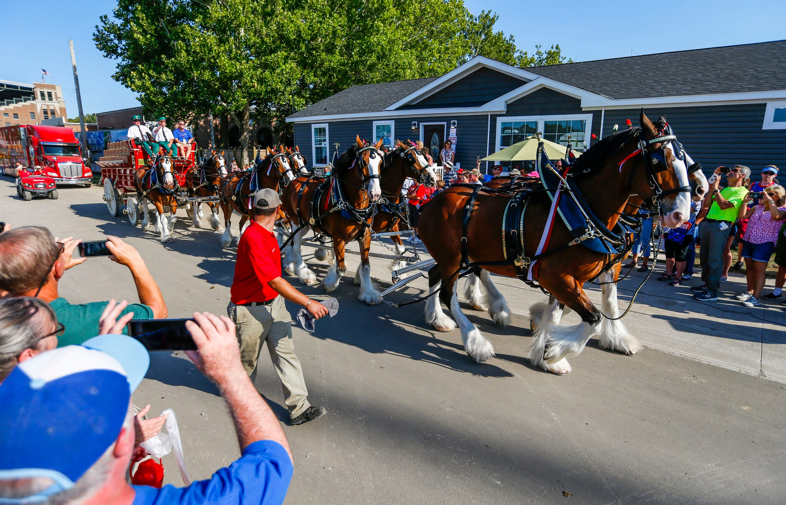 Photos: Budweiser Clydesdales at the Iowa State Fair