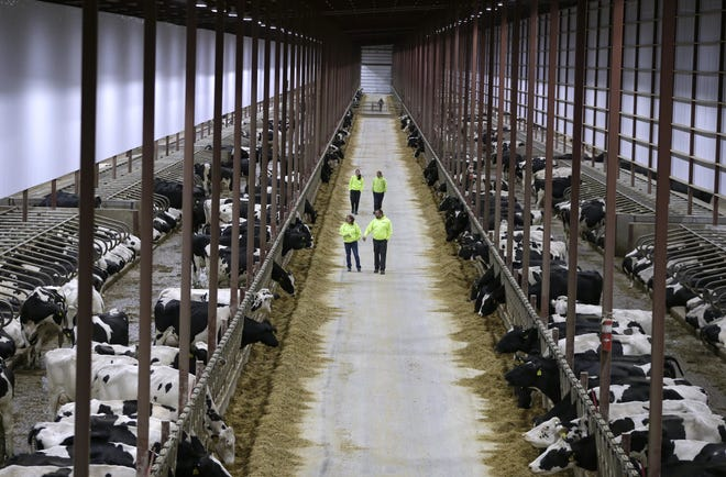 Photo shows a Concentrated Animal Feeding Operation for cattle in Indiana.