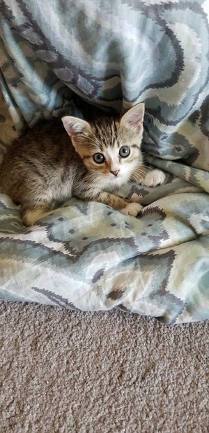 Ms. Maisely's adoption fee would be $20, which includes her spay surgery, vaccines, and microchip + registration.