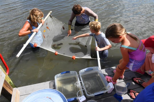 "Children and their parents learned about creatures that live in the Indian River Lagoon on Friday, Aug. 9, 2019, during a seining excursion with staff from the Environmental Learning Center in Indian River County. ""We basically wanted to give kids one last hurrah before they have to head back to school next week,"" said Heather Kramer, an environmental educator with the ELC. ""This is an opportunity to connect with their local habitat through seining and capture and inspect organisms that call the Indian River Lagoon home."" Participants caught various types of fish, shrimp and crabs during the activity."