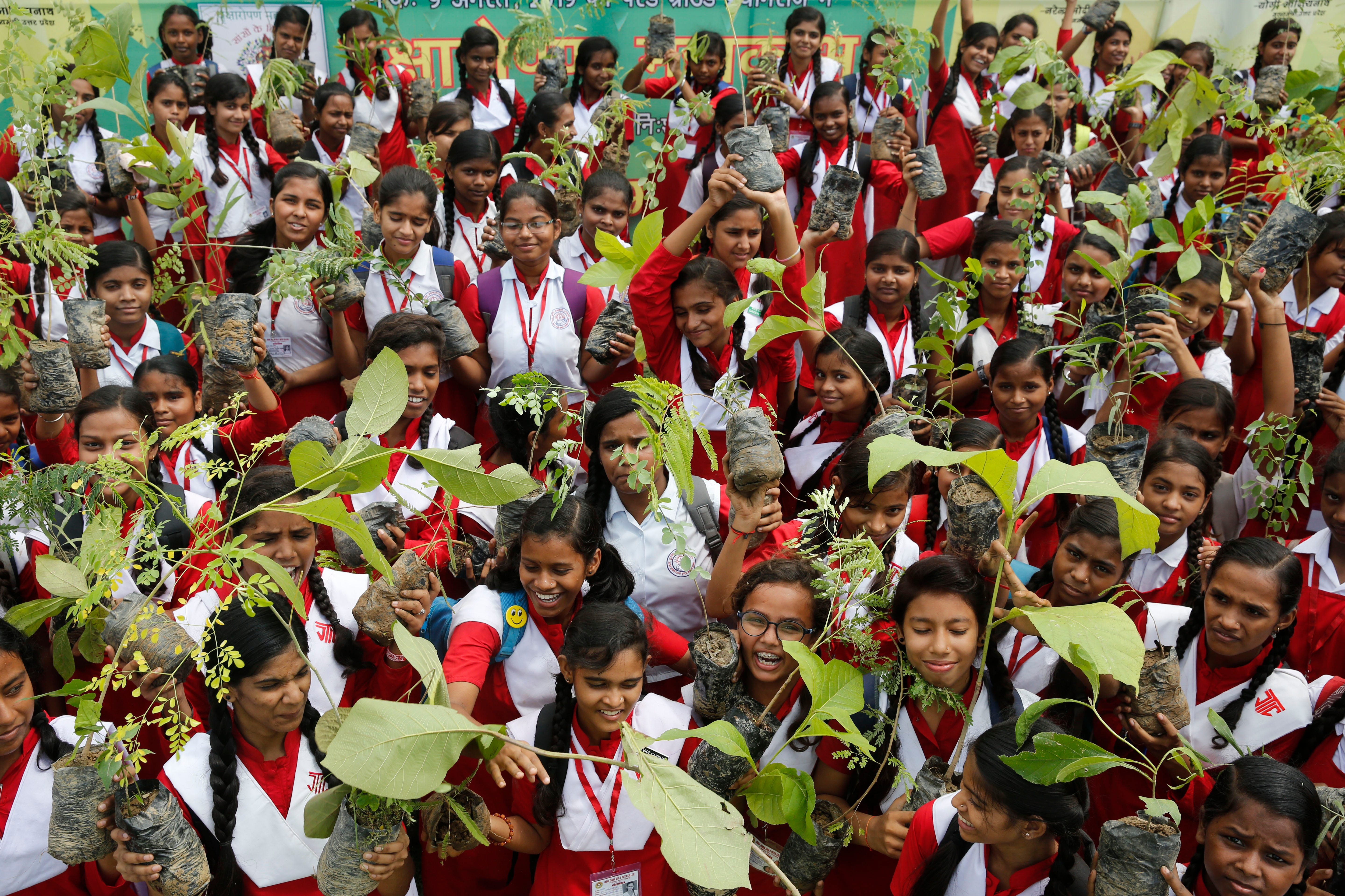 Indians plant 220 million trees in single day to combat climate change