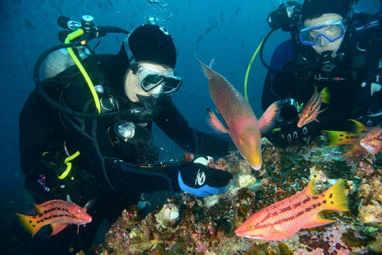 In this 2012 photo, Kim Sass of Battle Creek explores a reef in the Galapagos Islands.