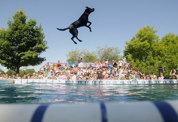 The Ultimate Air Dogs will do multiple performances Saturday and Sunday at the St. Clair Shores Aqua Fest.