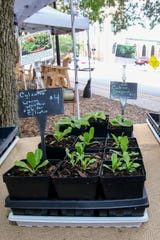 Some of the vegetable plants available from East Hill Edible Gardening's booth on Saturday, August 10, 2019, during the weekly Palafox Market downtown.