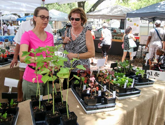 Renee Perry, co-owner of East Hill Edible Gardening, left, shows Nancy Stewart some of the different starter plants available at her booth during the weekly Palafox Market downtown.