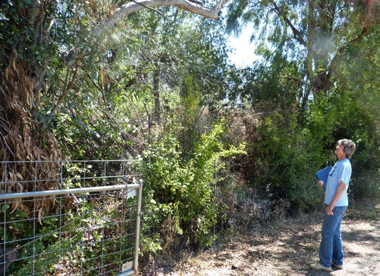 Sandra Winters of Happy Valley looks at the brush that grows up along the fence that runs between her land and her neighbor's property.