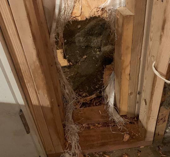 Denver Shooting Breaking News: Colorado Bear Breaks In House, Leaves Through Wall Like