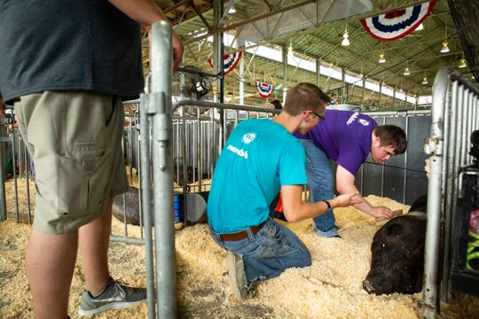 Isaac Baldus of Indianola brushes off his pig as his mentor Walker McDermott, center, helps out during the Iowa State Fair on Saturday, Aug. 10, 2019 in Des Moines. Bacon Buddies is a new program that pairs people with special needs with FFA participants to show pigs.