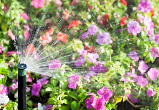 An automatic sprinkler watering a flowerbed.