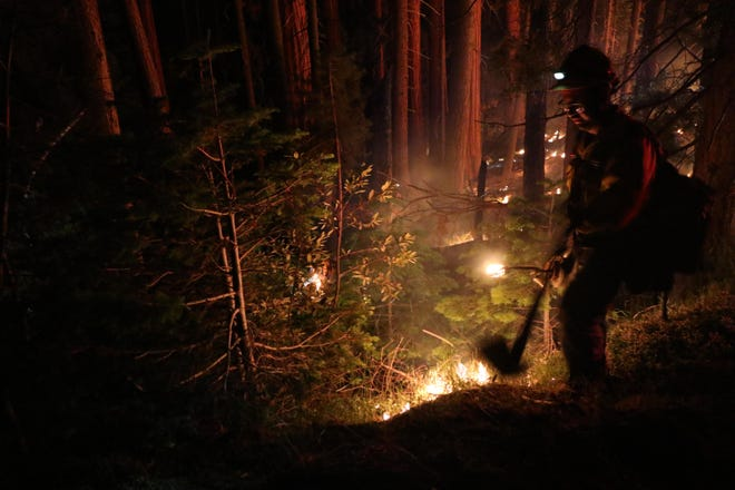 In July, a prescribed burn was held near General Sherman. Continued prescribed burning ensures this healthy forest is sustainable for future generations.