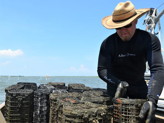 Dan Casey handles the smaller oyster cages, which are hooked onto ropes in the water where the oysters can grow.