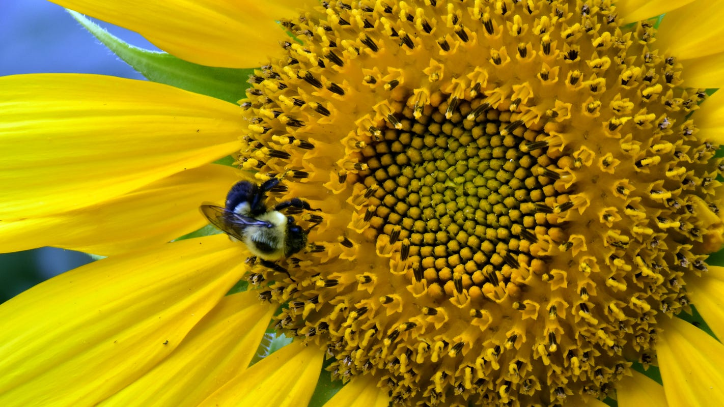 Research, education vital to the future of honey bees and other bee species