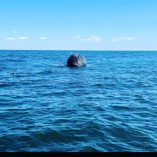 A deceased humpback whale drifts two miles off the coast of Long Branch on Aug. 11, 2019.