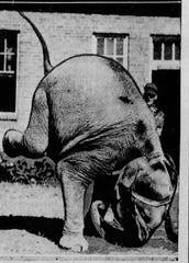From 1933: Baby Mine, Iowa children's own elephant, has learned many new tricks in the last year to perform for visitors to the Iowa State Fairgrounds.