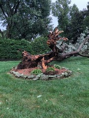 A tree was felled in Nathan Douglas' front yard during storms on Tuesday afternoon in Nashville. Douglas snapped the photo around 3:25 p.m. in his front yard on Fieldcrest Dr in Crieve Hall.