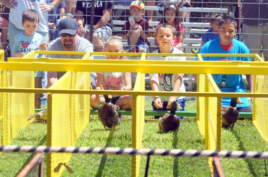 Duck racing on a dry track requires expert timing and not ducking the issue.