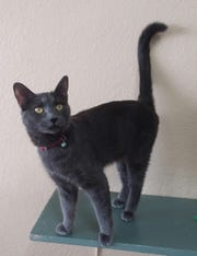 Veleska is available for adoption at 10807 N. 96th Ave. in Peoria. For more information, call 623-773-2246 after 10 a.m.