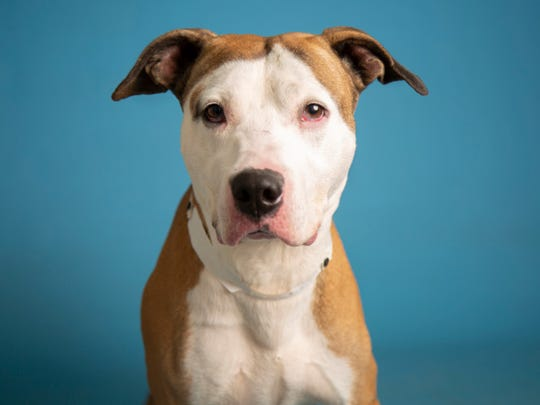 Prince is available for adoption on Aug. 18, 2019, at noon at 1521 W. Dobbins Road in Phoenix. For more information, 602-997-7585 and ask for animal number 609228.