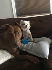 Skippy in foster care with his new dog friend.