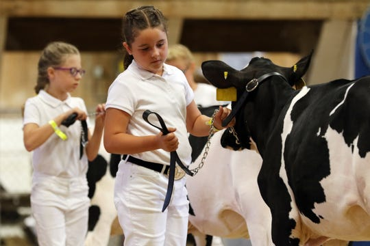 Contestants line up their cows during the Junior Fair dairy judging and showmanship show at the Muskingum County Fair on Tuesday. To view more photos, visit www.zanesvilletimesrecorder.com.