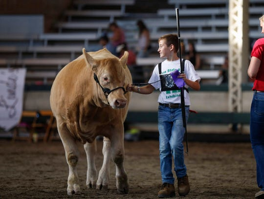 Corey Clark of Des Moines County 4-H holds onto his purple ribbon while leading his cow out of the show ring on Tuesday, Aug. 13, 2019, at the Iowa State Fair in Des Moines.