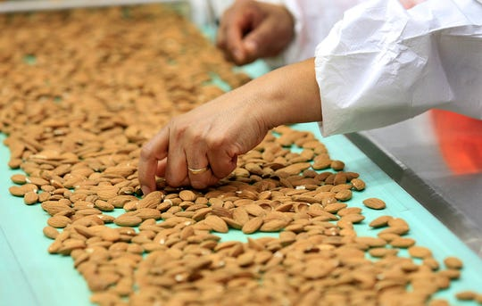 A worker hand sorts almonds, pulling off defective ones, after the nuts have passed through laser sorters at a processing plant in Lost Hills, Calif. (Brian van der Brug/Los Angeles Times/TNS)