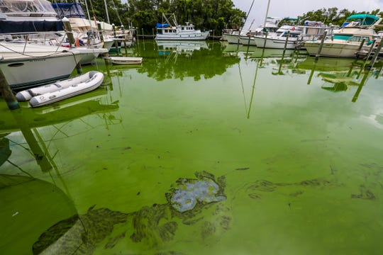 Paradise Marina in North Fort Myers was one of the areas hit the hardest with blue-green algae in the summer of 2018.