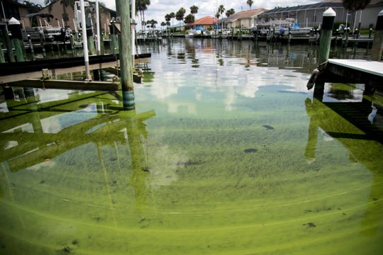 Cyanobacteria, known as toxic blue-green algae, can be seen in the water on July 3, 2018, at the Admiralty Yacht Club off Coon Road in North Fort Myers. FILE