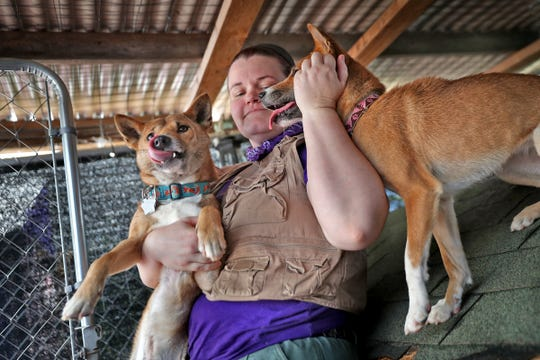 Jasmin Wieczorek spends time with New Guinea Singing Dogs Kovu and Toa Jean at Wizard of Paws Wildlife Education Inc. in Beech Grove, Sunday, Aug. 4, 2019.  Singing dogs are the rarest dog species in the world, and Jasmin and her husband Tyler Wieczorek have three of them.