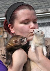 Jasmin Wieczorek, president of Wizard of Paws Wildlife Education Inc., holds Wyoming, a pole cat, and Texas, a ferret, at the Beech Grove shelter, Aug. 4, 2019.