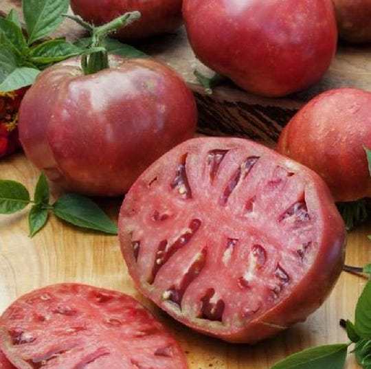 The Cherokee Purple tomato is characterized by its dark exterior and purple interior.