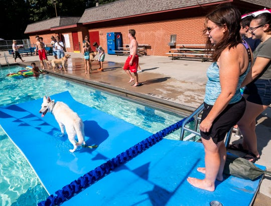 Kelly Dunn watches Schatzi, her 9-year-old White German Shepherd, as she walks out into Sanborn Pool during Dog Days at the Pool Wednesday, Aug. 14, 2019.