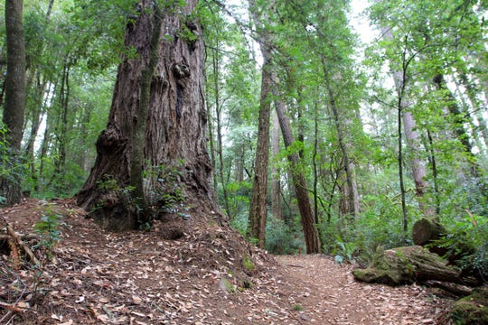 The hike from Loeb State Park to the Redwood Nature Loop features old-growth redwoods and views of the Chetco River.