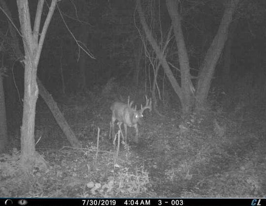 Cellular trail cameras allow hunters to monitor deer activity through their phones.