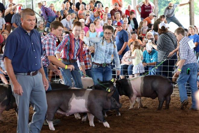 Junior Fair Market Hog judging at the Muskingum County Fair on Wednesday.