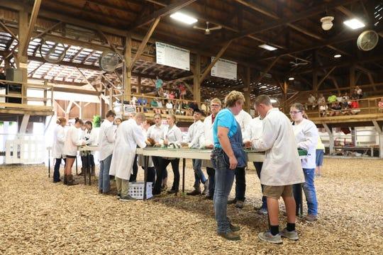 Junior Fair Rabbit Showmanship at the Muskingum County Fair on Wednesday.
