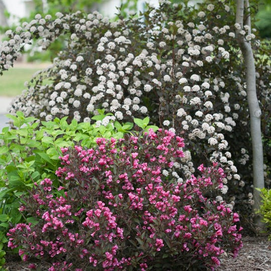A pictorial tour of the garden is to focus on the good, the bad and the ugly when it comes to how your plants are doing at this point of the season.